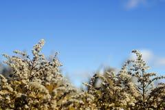 Поле с пушистыми цветками стоковые изображения rf