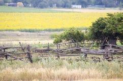 Поле с солнцецветами и пшеницей взгляд лета травы поля угла широко загородка старая Стоковая Фотография RF