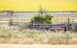 Поле с солнцецветами и пшеницей взгляд лета травы поля угла широко загородка старая Стоковое Фото