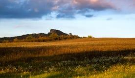 Поле с цветками и горой Стоковое фото RF