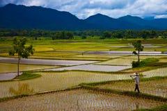 поле Таиланд внутренние районы страны Стоковое Изображение RF