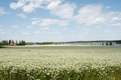 поле тимона Стоковое Фото