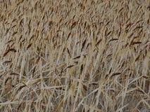 Поле травы в октябре стоковая фотография rf
