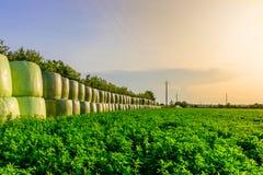 Поле травы Люцерна стоковые изображения rf
