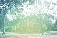 Поле травы полного цвета в большом парке города Стоковые Фотографии RF