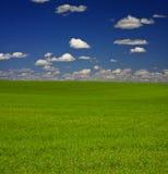 поле травянистое Стоковое фото RF