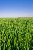 поле травянистое Стоковая Фотография