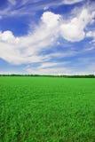 поле травянистое Стоковое Фото
