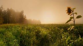 поле туманное Стоковые Фото