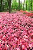 Поле тюльпанов в парке. Стоковая Фотография RF