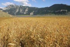 поле урожаев Стоковая Фотография RF