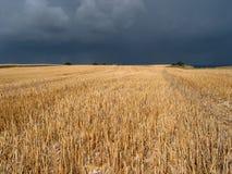 поле урожая стоковые изображения rf