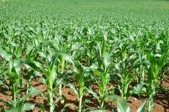 поле урожая Стоковые Фотографии RF