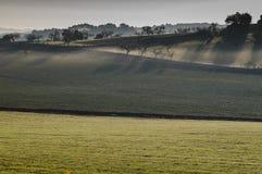 поле урожая Стоковая Фотография