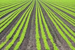 поле урожая Стоковые Изображения