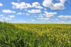 Поле ` фермеров заново засаженное Стоковая Фотография RF