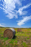 Поле фермы в западной Австралии стоковые изображения rf