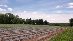 Поле фермы на после полудня весны видеоматериал