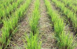 поле фермы стоковое фото rf