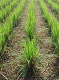поле фермы стоковое изображение rf