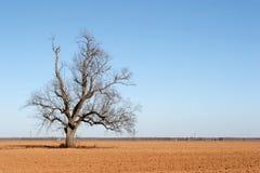 поле фермы Стоковые Фотографии RF