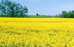 поле фермы saskatchewan canola Канады Стоковые Фото