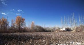 Поле хлопка в Синьцзян-Уйгурский автономный район Стоковая Фотография RF