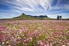 поле цвета Стоковое Фото