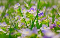 поле цветет вполне Стоковое фото RF