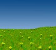 поле цветет небо Стоковые Изображения RF
