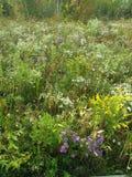 поле цветет одичалое Стоковые Изображения