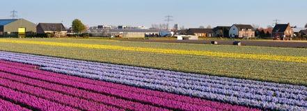 поле цветет панорама Стоковые Изображения RF