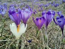 поле цветет пурпур стоковые изображения