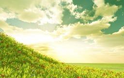 поле цветет пшеница Стоковые Фотографии RF