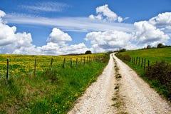 поле цветет среднее множество путя Стоковая Фотография