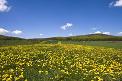 поле цветистое Стоковое Изображение RF