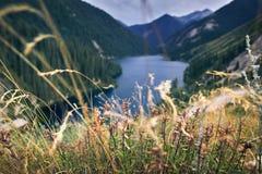 Поле цветка в горах Стоковое Изображение RF