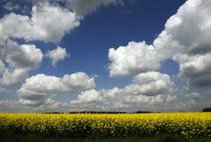Поле цветка и пасмурное небо стоковое изображение rf