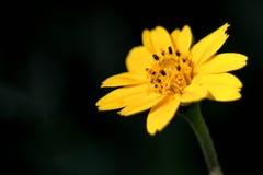 Поле цветков весны и улучшает солнечный день , съемка marcro Стоковые Изображения