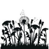 Поле цветков одуванчика Черные силуэты заводов лета на белой предпосылке План glade с Стоковые Изображения