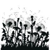 Поле цветков одуванчика Черные силуэты заводов лета на белой предпосылке План glade с Стоковое Изображение RF