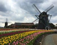 Поле цветков тюльпана перед ветрянкой Стоковое Изображение RF
