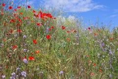 Поле цветков стоковое изображение rf