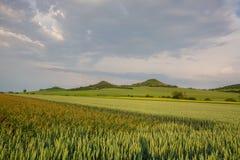 Поле чеснока в центральных богемских гористых местностях, чехии стоковая фотография rf
