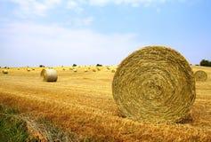 поле шариков Стоковое фото RF