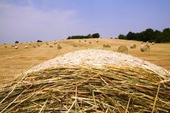 поле шариков Стоковые Фото