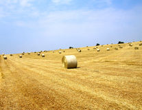 поле шариков Стоковое Фото