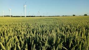 Поле ячменя, ветровая электростанция стоковая фотография rf