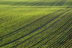 поле ячменя стоковое изображение