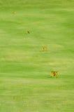 Поле для гольфа Стоковые Изображения